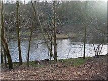NS5666 : River Kelvin in Kelvingrove Park by Stephen Sweeney