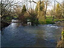 SP1007 : River Colne by andy dolman