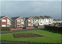 NX1896 : Elder Avenue, Girvan by Mary and Angus Hogg