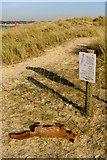 SZ1891 : Dead fox on Mudeford Spit by Jim Champion