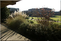TL4359 : Churchill College shrubbery by Fractal Angel