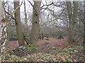 NS9495 : Wet woodland by Richard Webb