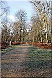 SU2609 : Track junction in Highland Water inclosure by Peter Facey