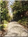 SU7887 : Lane by Pheasant's Hill by David Hawgood