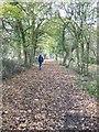 SJ4006 : Walking the line by Dave Croker