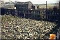NZ1637 : Onion crop, rear of 4 Railway Terrace, Stanley, Crook by Tom Jolliffe