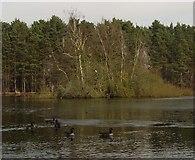 SU8265 : Heath Lake near Crowthorne by Diane Sambrook