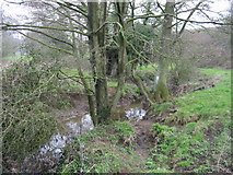 ST6961 : Conygre Brook, near Priston Mill by Nick Smith