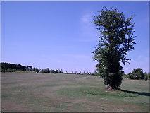SU6154 : Weybrook Park Golf Course -  5th Fairway by Alan Swain