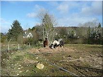 T1168 : Horses feeding by Jonathan Billinger