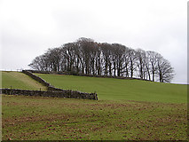SD8172 : Beside the Pennine Way, to the east of Horton by John Lucas