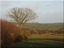 SX1691 : Evening sun on fields at Penhale by David Hawgood