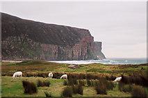 ND2099 : Rough Sheep Pasture at Rackwick by Richard Kay