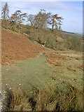 SJ1663 : Looking down the Clwydian Way. by David Quinn