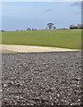 SE9834 : Across Potter Dale, Little Weighton by Paul Harrop