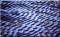 NT4682 : Ripples in the sand by Mike Pennington