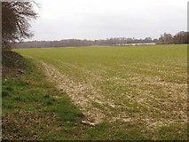 SU8790 : Winter wheat near Flackwell Heath by David Hawgood