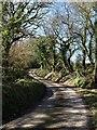 SX2290 : Lane to Elmfield by Derek Harper