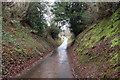 SO2903 : Sunken lane west of Mamhilad by Roger Davies