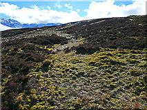 NN5741 : Moorland and bog by Dr Richard Murray