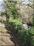 NY9539 : Footpath alongside Rookhope Burn near the waterfall by Mike Quinn