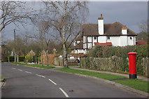 TQ2258 : Downs Wood, Tattenham Corner by Stephen McKay
