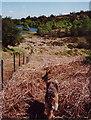 SD3587 : Boretree Tarn, the walk in by Peter Bond