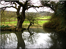SU8518 : Pond near Bepton Church by Chris Gunns