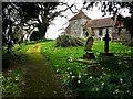 SU8518 : St Mary's church, Bepton by Chris Gunns