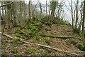 NX4848 : Ruined Wall, Shore Wood Belts by Mick Garratt