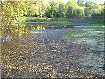 TQ4666 : Priory Gardens pond by Lindsey Coates