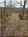 SX7582 : Dartmoor Way on Neadon Cleave by Derek Harper