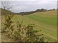 SE9336 : Swin Dale, eastern end by Paul Harrop