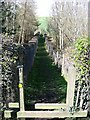 NZ2941 : Footpath alongside Shincliffe Mill Nurseries by Roger Smith
