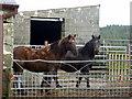 SN0430 : Horses at Lodor Fach by ceridwen