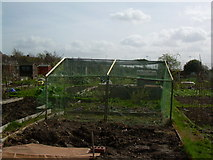 TQ2673 : The Allotments by Chris Cox