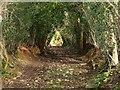 SX8879 : Chudleigh Bridleway 3 by Derek Harper