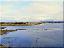 NJ3365 : The Nature Reserve at Kingston by Ann Harrison