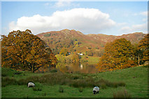 NY3404 : Loughrigg Tarn by Phil Champion