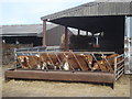 SO8740 : Cattle at Sudeley Farm - 2 by Trevor Rickard