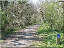 SW8243 : Cycle track along the old railway line from Truro to Newham by Rod Allday