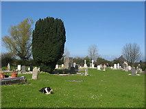 O1664 : Old St. Mary's Church and Graveyard, Balscaddan by Kieran Campbell