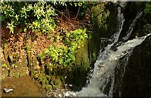 J4681 : Waterfall, Crawfordsburn Glen (4) by Albert Bridge