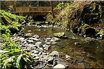 J4681 : Footbridge, Crawfordsburn Glen (2) by Albert Bridge