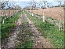 SO6731 : Farm track to the Kempley lane by Trevor Rickard
