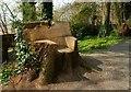 J4772 : Tree seat, Killynether Wood by Albert Bridge