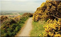 J4772 : Path, Killynether Wood (4) by Albert Bridge