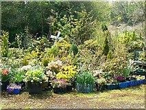 ST7693 : Flower garden, Ram Inn, Potters Pond, Wotton under Edge by Brian Robert Marshall