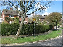 SU6350 : A good garden hedge - Neville Close by Given Up