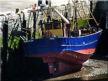 SC2484 : Manx Rose, Peel Harbour, low tide by Chris Gunns
